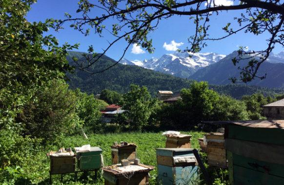 Пчелы и Сванетия